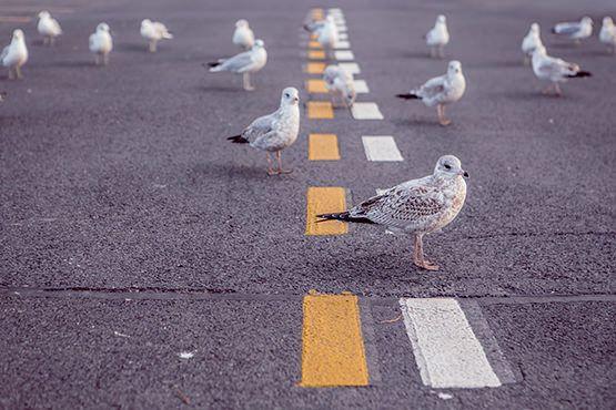 Le minimalisme de gestion